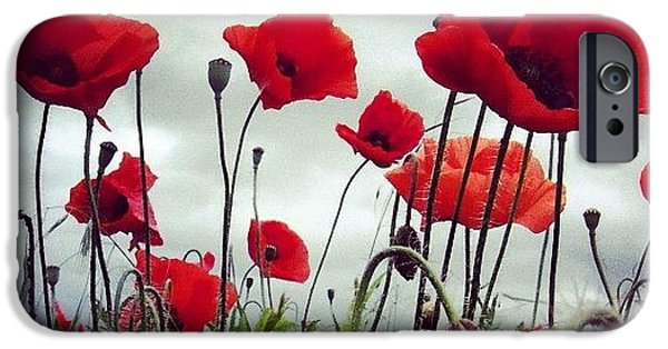 Sky iPhone 6 Case - #mgmarts #poppy #weed #flower #spring by Marianna Mills