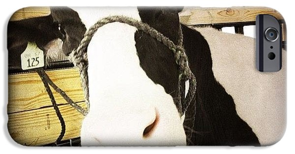 Ohio iPhone 6 Case - Moo Cow by Natasha Marco