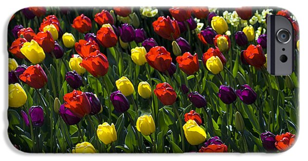 Multicolored Tulips At Tulip Festival. IPhone 6 Case by Yulia Kazansky
