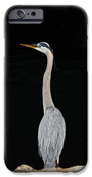 Night Of The Blue Heron 3 IPhone 6 Case