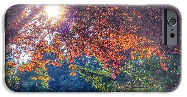 Sunny iPhone 6 Case - Oak Street Early Evening Light by Anna Porter