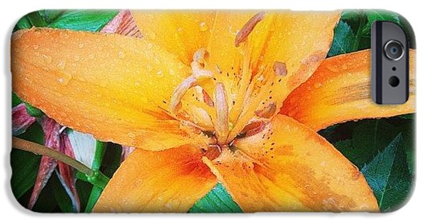 Orange iPhone 6 Case - #orange #lily After The #rain Is Still by Teresa Mucha
