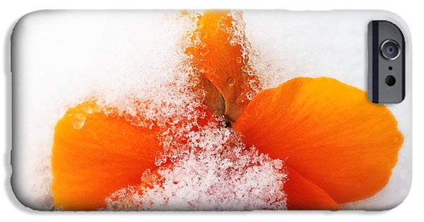 Orange iPhone 6 Case - Orange Pansy Flower Covered With White Snow In Spring by Matthias Hauser