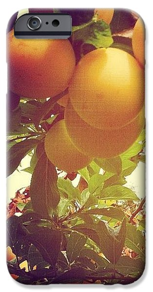 Orange iPhone 6 Case - Our Plum Tree Is Loaded This Year...any by Blenda Studio