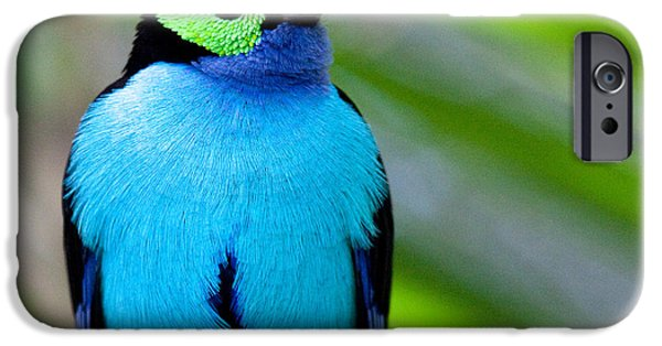 Paradise Tanager IPhone 6 Case by Nathan Rupert
