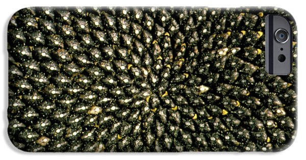 Sunflower Seeds iPhone 6 Case - Pattern Of Seedhead Of Sunflower by George Bernard/science Photo Library