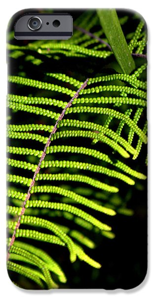 IPhone 6 Case featuring the photograph Pauched Coral Fern by Miroslava Jurcik
