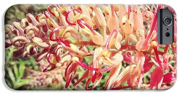 Decorative iPhone 6 Case - Australian Grevillea Flower by Sinead Connell
