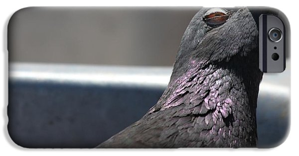 Pigeon In Ecstasy  IPhone 6 Case by Nathan Rupert