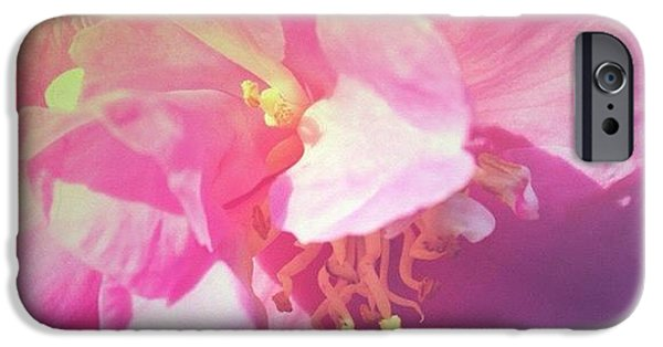 Pink Camellia Vintique Edit IPhone 6 Case