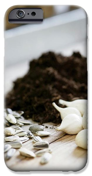 Sunflower Seeds iPhone 6 Case - Plant Seeds And Bulbs by Gustoimages/science Photo Library