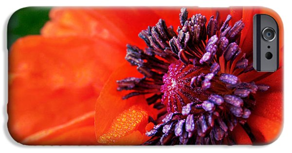 Poppy's Purple Passion IPhone 6 Case by Bill Pevlor