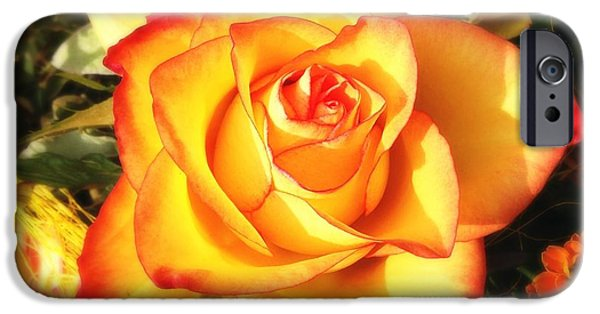 Pretty Orange Rose IPhone 6 Case