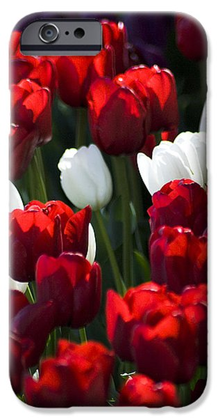 Red And White Tulips IPhone 6 Case by Yulia Kazansky