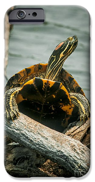 Slider Photographs iPhone Cases - Red Eared Slider Turtle iPhone Case by Robert Frederick
