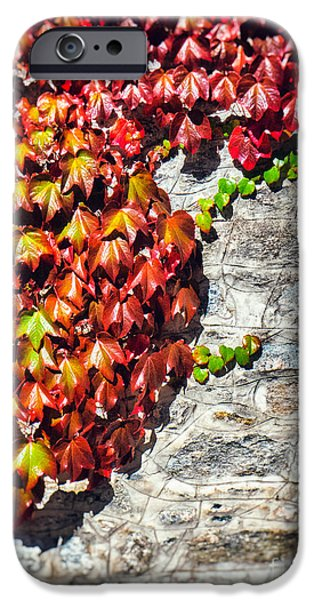 IPhone 6 Case featuring the photograph Red Ivy On Wall by Silvia Ganora