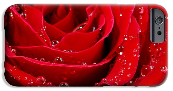 Red Rose iPhone 6 Case - Red Rose by Elena Elisseeva