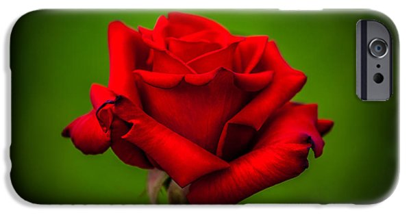 Red Rose iPhone 6 Case - Red Rose Green Background by Az Jackson