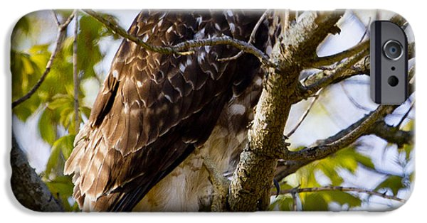IPhone 6 Case featuring the photograph Red Tailed-hawk by Ricky L Jones