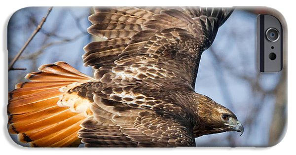 Redtail Hawk Square IPhone 6 Case by Bill Wakeley