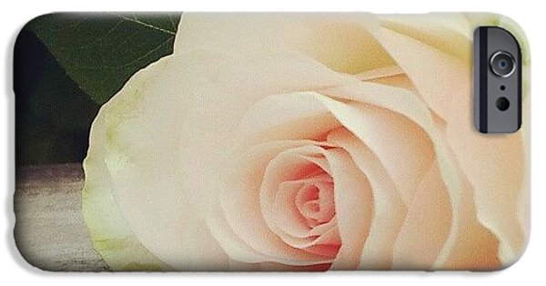 Decorative iPhone 6 Case - Rosebud On Wood by Jacqueline Schreiber