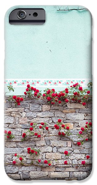 Roses On A Wall IPhone 6 Case by Silvia Ganora