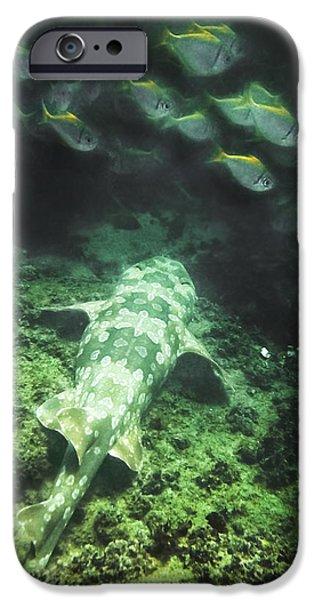 IPhone 6 Case featuring the photograph Sleeping Wobbegong And School Of Fish by Miroslava Jurcik