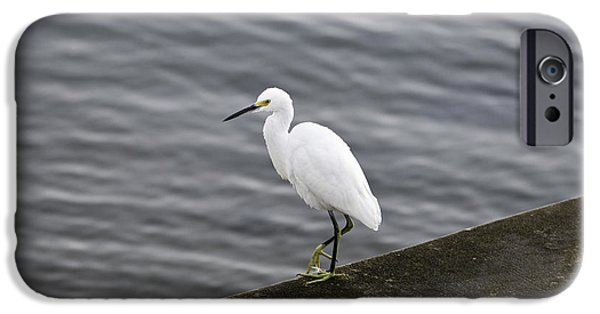 IPhone 6 Case featuring the photograph Snowy Egret by Anthony Baatz