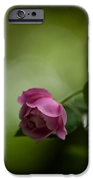 Rose iPhone Cases - Soft Pink Rose iPhone Case by Mike Reid