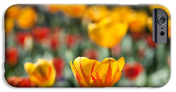 Spring Is Upon Us IPhone 6 Case by Nathan Rupert