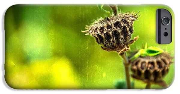 Sunflower Seeds iPhone 6 Case - Stark Beauty by Jon Woodhams