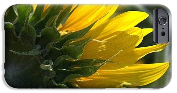 Colorful iPhone 6 Case - #sunflower #closeup by Georgia Fowler
