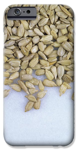 Sunflower Seeds iPhone 6 Case - Sunflower Seeds (helianthus Annuus) by Geoff Kidd/science Photo Library