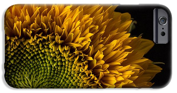 Sunflower Seeds iPhone 6 Case - Sunflower Square by Edward Fielding