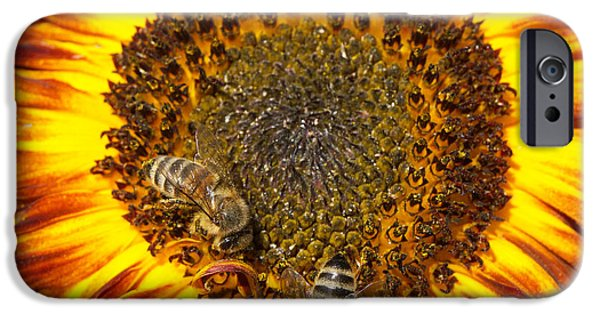 Sunflower With Bees IPhone 6 Case