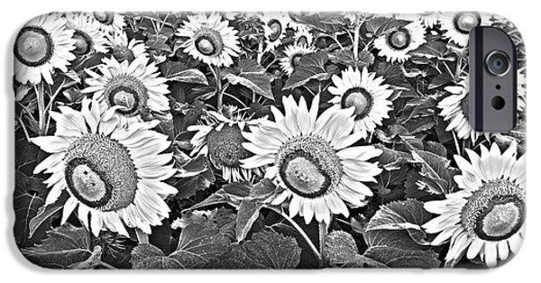 Sunflower Seeds iPhone 6 Case - Sunflowers by Elena Nosyreva
