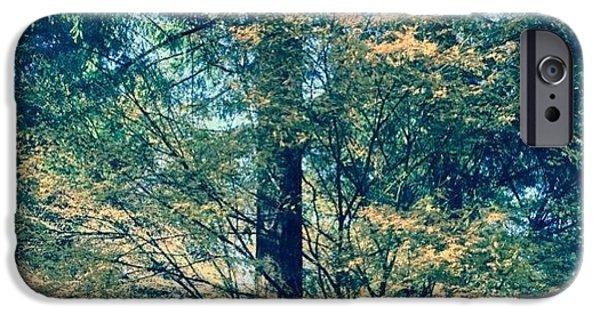 Sunny iPhone 6 Case - Sunlight Through Vine Maples by Anna Porter