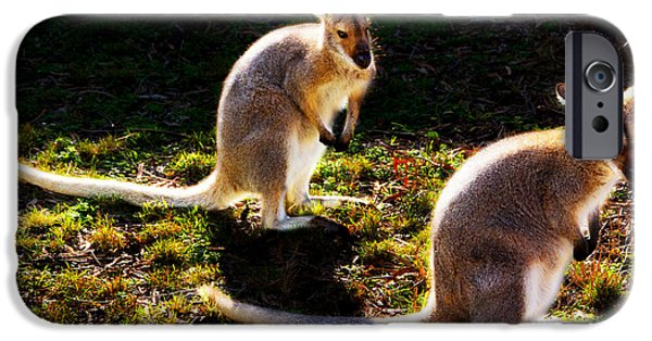 Red-necked Wallabies IPhone 6 Case