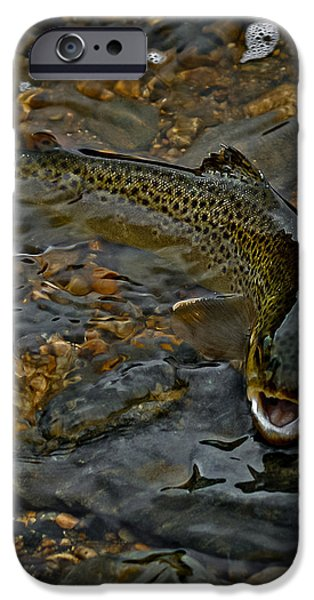 The Brown Trout iPhone Case by Ernie Echols