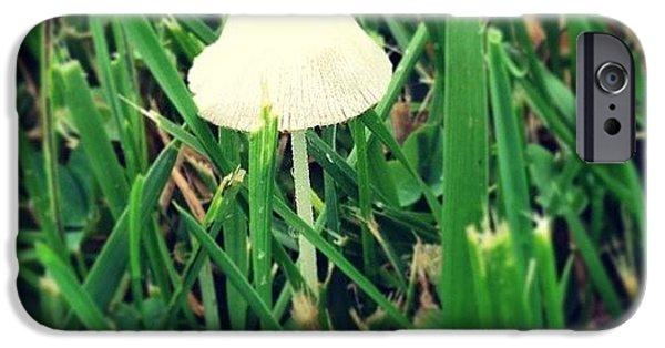 Green iPhone 6 Case - Tiny Mushroom In Grass #mushroom #grass by Marianna Mills