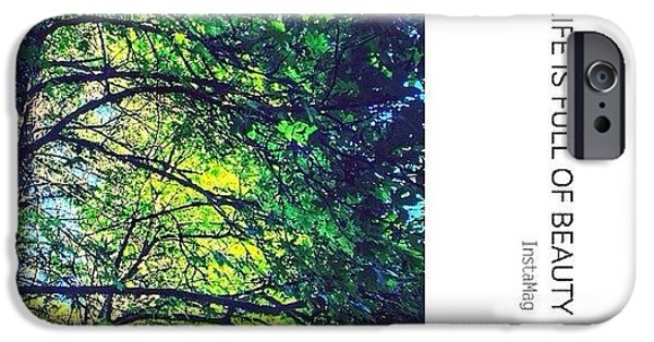 Sunny iPhone 6 Case - Tree Canopy From My Afternoon Walk by Anna Porter