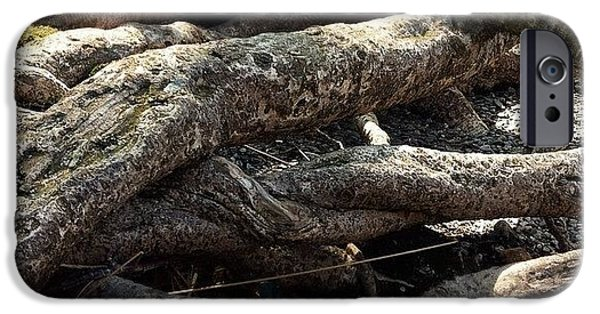 Detail iPhone 6 Case - Tree Roots  by Sean Cahill