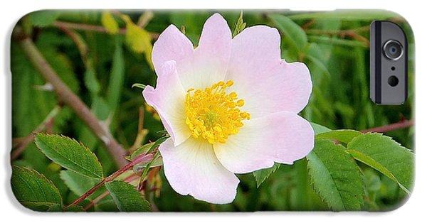 Vert Jaune Rose IPhone 6 Case