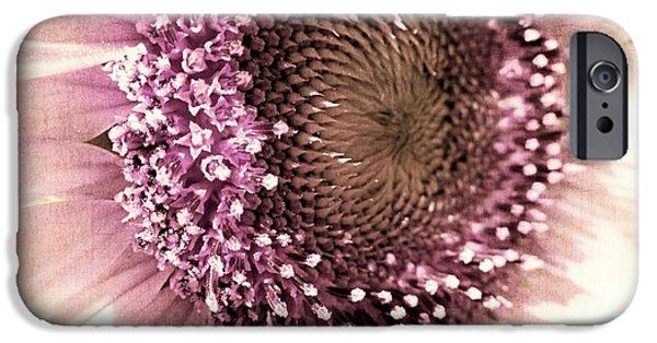 Sunflower Seeds iPhone 6 Case - Vintage Sunflower  by Marianna Mills