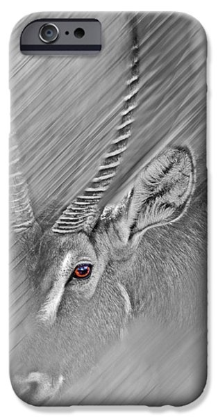 Waterbuck IPhone 6 Case