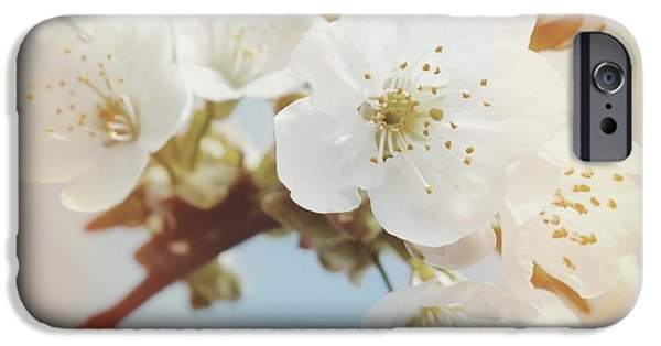 White Apple Blossom In Spring IPhone 6 Case