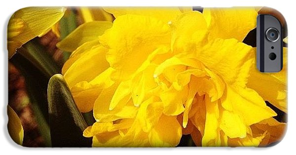 Bright iPhone 6 Case - Yellow Daffodils by Christy Beckwith