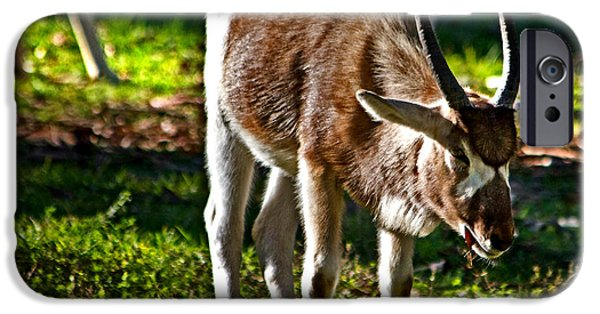 Youngster Addax IPhone 6 Case