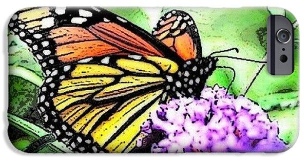 Orange iPhone 6 Case - Monarch Butterfly by Edward Sobuta