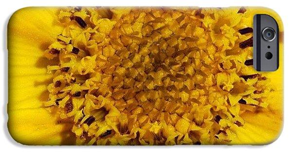 Yellow Flower Detail IPhone 6 Case by Matthias Hauser